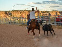 Calf Roping (nebulous 1) Tags: capitalreefnp cowboyhomesteadcabins torrey utah rodeo calfroping dust hooves lasso lariat calf ranch