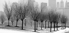 Witches Brooms (chantsign) Tags: blackandwhite bw monochrome park winter white skyline backround lampost bench river hudson baretrees jerseycity snow manhattan