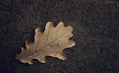 Sail Away (akigabo) Tags: montreal nature leaf water drops autumn fall sail texture minimal canon eos aquigabo dsrl rebel t5i 700d 50mm composition life rain contrast light details focus morning