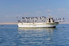 Zatoka Paracas | Paracas Bay