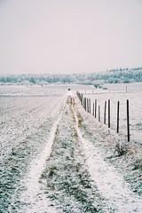 the first snow (lina zelonka) Tags: oberolm germany rheinlandpfalz linazelonka schnee snow winter rlp rhinelandpalatinate deutschland rheinhessen vertical landscape nature countryside nikond7100 18105mm europe europa vanishingpoint fluchtpunkt