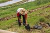 IMG_4381 (PPFractal) Tags: indonesia bali asia arroz rice ricefields composdearroz agricultura griculture wrok worker trabajdor granjero granja farm farmer
