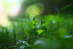 IMG_6894 (PRETTY AWRSOME) (TehOblivious) Tags: life lighting light sunset sky sun macro green nature leaves closeup clouds canon 50mm leaf bokeh testing f18 technicolor jpeg backlighting 2015 nickhall notraw uselesstags bokehporn cinestyle 700d t5i tehoblivious