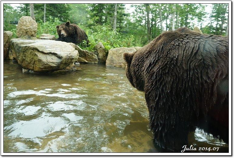 熊牧場 (30)