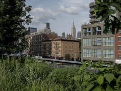 The High Line (1hr photo) Tags: park nyc railroad plants newyork railway greenery empirestatebuilding horticulture highline morans thehighline elevatedrailroad overheadrailroad