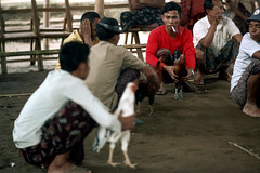 26-143 (ndpa / s. lundeen, archivist) Tags: people bali man color men bird film birds 35mm indonesia 26 cigarette nick cock smoking arena southpacific handlers rooster cocks 1970s spectators smoker 1972 handler roosters indonesian crouching cockfight gamecock onlookers squatting gamecocks balinese dewolf oceania pacificislands cockfighting nickdewolf photographbynickdewolf cockfightingarena reel26 cockfightarena