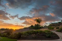 Out the Driveway (Joe Richland) Tags: hawaii bigisland