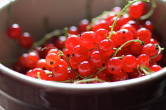 red currant harvest (packofhuskies) Tags: harvest ouryard jewels redcurrants backyardgardening redcurrantberries fruitinbowl berriesinbowl