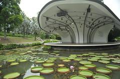 Botanic Gardens (dony 65) Tags: park pond nikon singapore stage d300 nelumbo nucifera