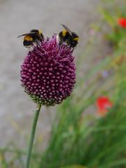 Beesatiated (Alan Wiltcher) Tags: bees gardenhouse aperturewoolwich