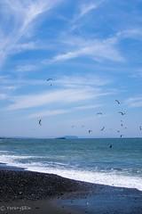 2015 Summer #4 (Yorkey&Rin) Tags: summer japan july bluesky olympus enoshima  paraglider kanagawa rin sunnyday   2015 chigasaki   em5   lumixg20f17 pc236815