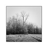 Väterchen Frost (cardijo) Tags: austria österreich salzburg landscape landschaft tree baum frost eis ice winter rolleiflex carlzeiss tessar ilford fp4 rodinal nikon coolscan