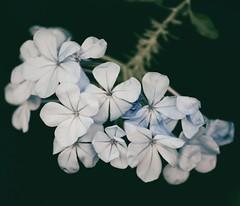 (winterprinzessin89) Tags: flower flowers photografie fotografie summer photographie photography sommer blütenblatt blume blumen outdoor natur nature nikon dslr d3200 outdoors photo