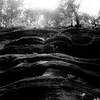 In Canyons 110 (noahbw) Tags: d5000 frenchcanyon nikon starvedrockstatepark abstract blackwhite blackandwhite bw canyon cliffs forest landscape light monochrome natural new noahbw rock shadow spring square stone trees woods