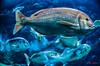 pez (casalderreyj) Tags: acuario coruña