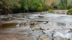 2017-01-17 Rivelin-7410.jpg (Elf Call) Tags: nikon rivelin river yorkshire water stream 18105 sheffield steppingstones waterfall d7200 blurred