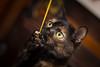 Hmmmm. (Calamity_Jane138) Tags: bokeh pets animals cute playful eyes kitten paws paw