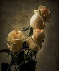 Roses... (JACRIS08) Tags: flores rosas texturas luz