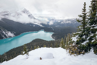Peyto in Snow