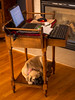 Working like a dog (John Clay173) Tags: englishmastiff millie jclay