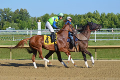 2015-07-31 (66) r6 Sheldon Russell on #4 Simmadownnow (JLeeFleenor) Tags: photos photography md marylandracing marylandhorseracing laurelpark sheldon sheldonrussell jockey   jinete  dokej jocheu  jquei okej kilparatsastaja rennreiter fantino    jokey ngi horses thoroughbreds equine equestrian cheval cavalo cavallo cavall caballo pferd paard perd hevonen hest hestur cal kon konj beygir capall ceffyl cuddy yarraman faras alogo soos kuda uma pfeerd koin    hst     ko  maryland