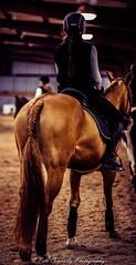 Braided (4 Pete Seek) Tags: littlecreekhorsefarm creek horse horsefarm decaturdigitalphotography decaturgeorgia