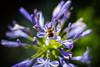 at the top (grandenstor) Tags: kert virág flower bee nature insect