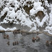 Snow Monkey (1) : gathering in a hot spring