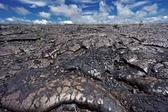 Lava field (marko.erman) Tags: lava field landscape tree kīlauea popular travel sun sunny hawaii island nature fire heritage eruption melted worldheritagesite unitedstates sony hawaiʻivolcanoesnationalpark mineral ultrawideangle uwa wideangle horizon