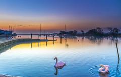 Reflecting On Dawn (nicklucas2) Tags: seascape christchurch quay reflection bird swan