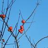 Some leftovers (Landanna) Tags: leftovers apples appels fruit frugt baretree bluesky square
