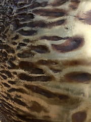 Stratford-Upon-Avon 11-09-2016 (Karen Roe) Tags: stratforduponavon williamshakespeare newplace warwickshire county gb greatbritain uk unitedkingdom iphone mobile camera photography photograph photographer picture image snap shot photo karenroe female flickr tourist visit visitor september 2016 history