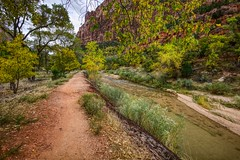 The Trail (Herculeus.) Tags: 2016 bouldersstonerocks cliffs clouds country day erosion fall flowersplants grass landscape leaves mountains nationalparks northforkofthevirginriverut oct outdoor outdoors outside parks pathwaystrails river rockwall scrub sky trees ut zionnp 5photosaday ngc