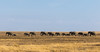 Elephants (Arun Sundar) Tags: tanzania elephants wildlife safari serengeti
