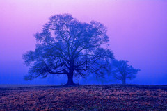 Early Morning, Omega Farms (George McHenry Photography) Tags: trees landscape fog morning morningfog