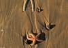 Washed ashore (Robby van Moor) Tags: beach sand strand starfish sea washed ashore noordwijk holland