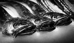 Three Hakes (King Grecko) Tags: 5dmk3 seafood blackandwhite canon contrast cooking cuisine eos fish food freshfish hake mallorca market meditteranean plama spain