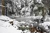 Im Winterwald (berndtolksdorf1) Tags: natur wald jahreszeit winter schnee outdoor forest
