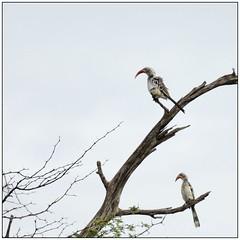_DSC5692PJ_resultat (http://phj.bookfoto.com/) Tags: okavango botswana afrique philippe jubeau