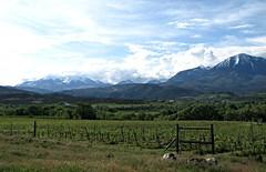 Vineyards near Paonia (jimsawthat) Tags: mountains clouds rural colorado grapes vinyards paonia westelkmountains