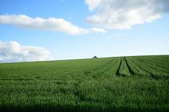 20150611 Hokkaido 4 (BONGURI) Tags: sky cloud green field nikon df hokkaido wheat hill jp    biei   wheatfield       kamikawadistrict afsnikkor2485mmf3545gedvr