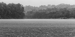 Tropical Rainforest (Rafael Gonzalez V.) Tags: blackandwhite bw blancoynegro rain lluvia venezuela bn 315 ven amazonas rmtf largadistancia rafaelgonzalezv largadistanciaphoto autanaycuao