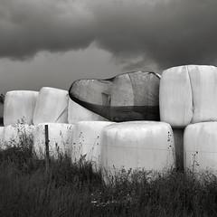 Sommarkvartett IV (MKarlsson) Tags: summer sky field clouds barn cow pasture birch