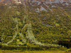 An avalanche of trees (TAKleven) Tags: trees mountain tree green norway norge tre nordnorge fjell avalanche trr vesterlen grnn nordland grnt skred canonef24105lisusm canoneos5dmarkii nothernnorway