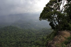 The view point close to Dare Nature Wayanad