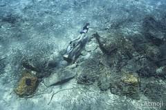 WildQuest Dolphin Retreat 9-2015 (Wildquest Bimini) Tags: wild swim underwater dolphin dolphinswim dolphintales swimmingwithdolphin wildquest swimwithdolphin atmoji