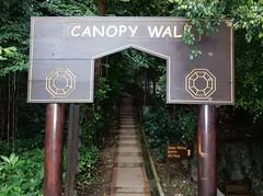 Canopy Walk (mikecogh) Tags: kualalumpur kl ecopark rainforest path steps sign