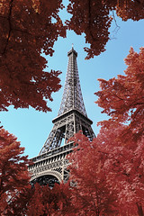 Red Lady (PLF Photographie) Tags: infrarouge infrared paris france tour eiffel tower nature arbre tree leaf feuille rouge red monument architecture