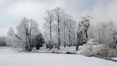 Winter beauty (l-vandervegt) Tags: 2017 nederland netherlands holland niederlande paysbas overijssel deventer park parc winter sneeuw snow white wit landschap landscape