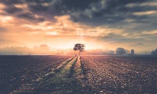 [ solitary tree ]